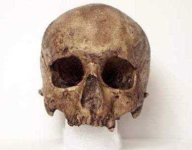Homo sapiens cro-magnon skull, front view :: CSHL DNA