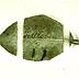 Gallery 3: Gregor Mendel 's Experimental Leaf Specimen